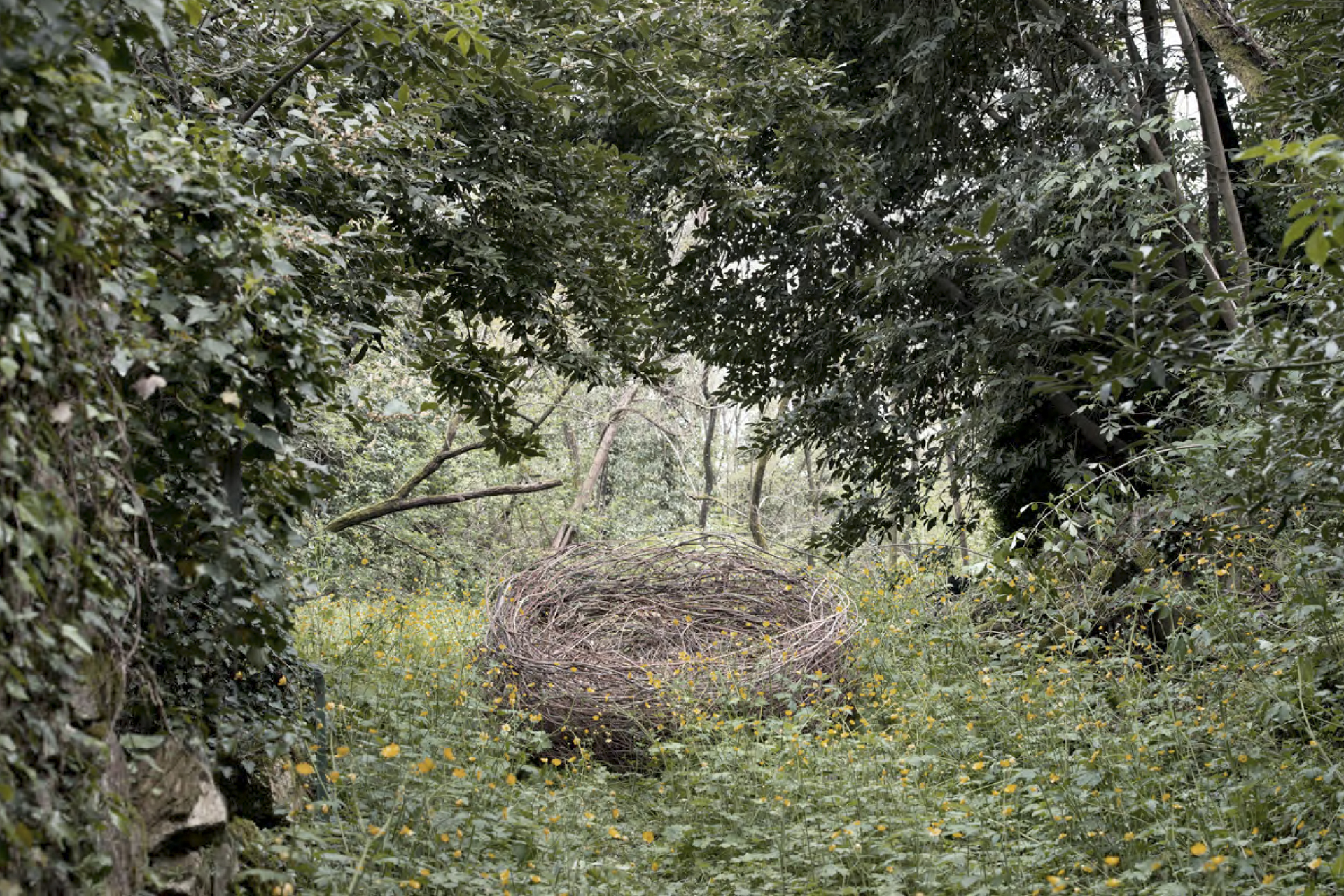 The Big Nest